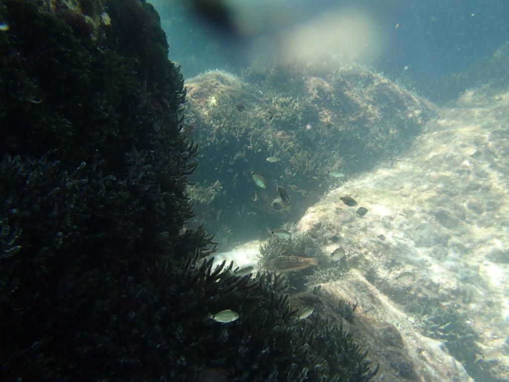 Snorkeling tour deep sea fishing charters gulf beaches for Madeira beach fishing charters
