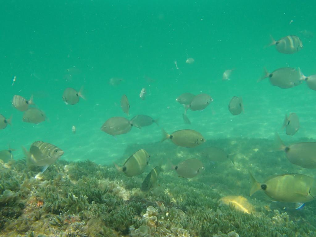 Snorkeling tour deep sea fishing charters gulf beaches for John s pass fishing charters