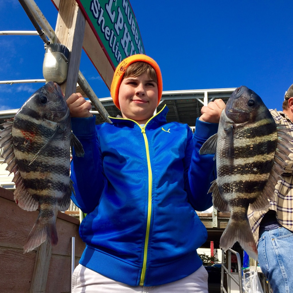 Chuck Drew showing off two fat sheepshead he caught on the Hubbard's Marina dock using our special frozen oyster bait we have in our bait and tackle store