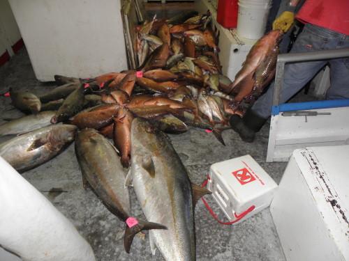 fish pile
