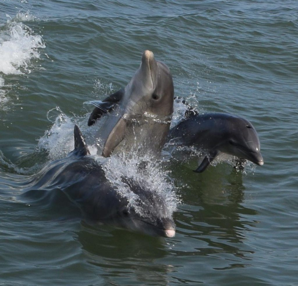 Nothing beats the views offered during a relaxing cruise with Hubbard's Marina we have dolphin watching nature cruise and eco tours, shelling cruises, sunset tours, and even island ferry